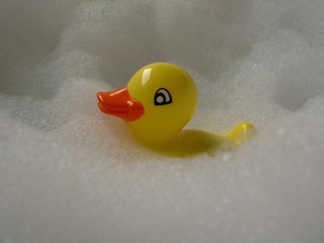 180409-fujisaka-duck